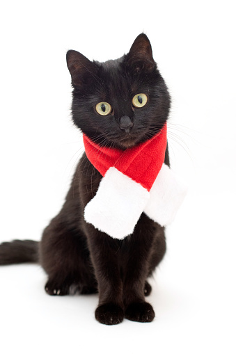 Portrait of black cat in Santa Claus costume. Christmas dress and Santa Claus hat on black cat