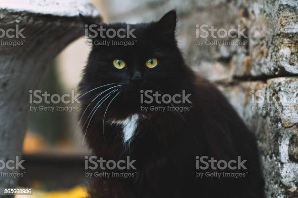 Portrait of black cat with green eyes in the vicinity of the medieval picture id865668986?b=1&k=6&m=865668986&s=612x612&h=2rchxrj7hqnfc1dnaxmtsapdksxgqnw186b00gaqlek=