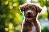 istock Portrait of brown puppy with bokeh background 636475496