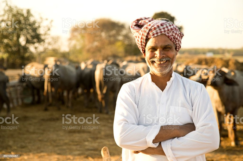 Portrait of buffalo shepherd stock photo
