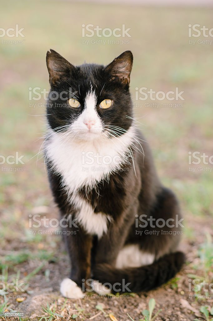 Portrait of cat looking at camera stock photo