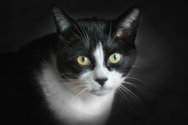 Porträt von Katze – Foto