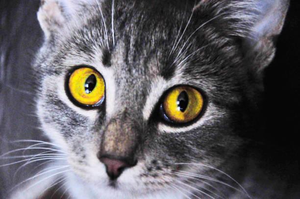 Portrait of cat picture id980259658?b=1&k=6&m=980259658&s=612x612&w=0&h=n616c1qhro2x8 9diimoi39njzcgrhz6u1p5zbqvonq=