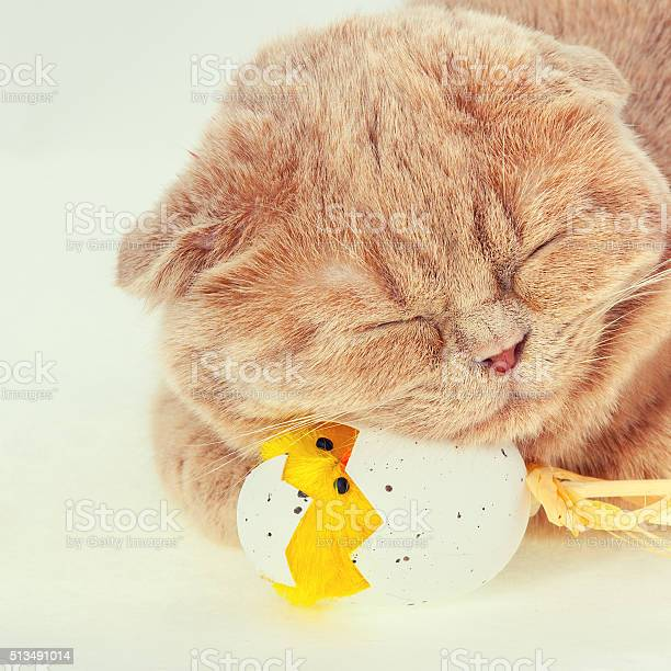Portrait of cat sleeping on easter egg with toy chicken picture id513491014?b=1&k=6&m=513491014&s=612x612&h=nn3yqtqg tpbyegxzsusnghh4iyf3col0ulfho8iogs=
