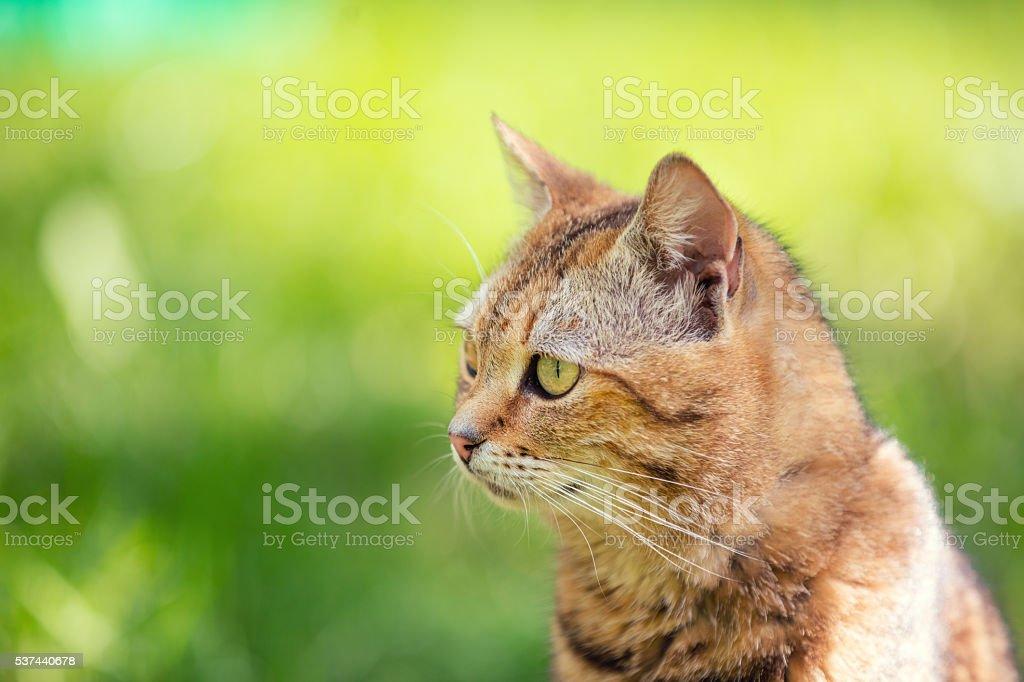 Porträt von Katze zu Fuß im Freien – Foto