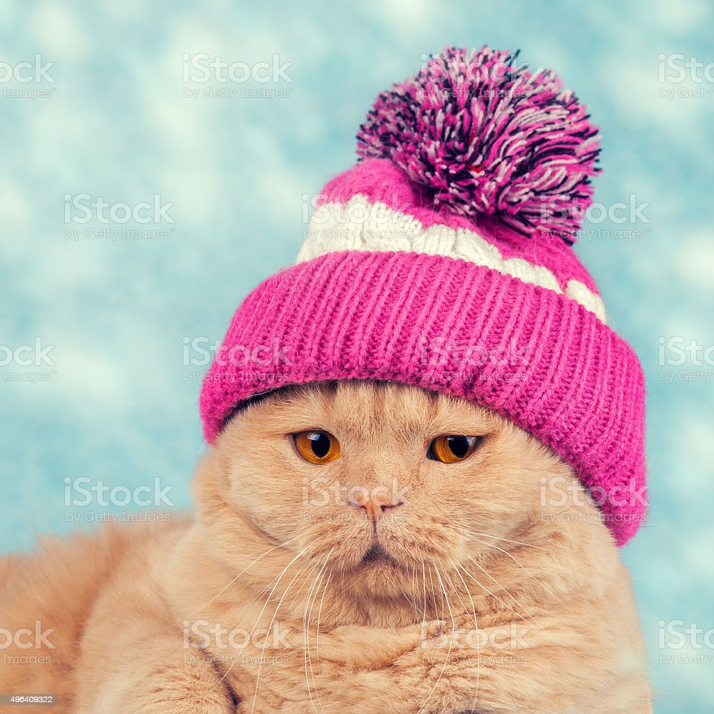 Portrait of cat wearing a knitted cap with pompom stock photo