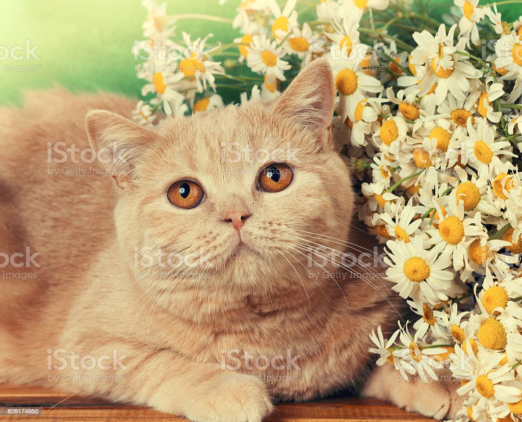 Portrait of cat with flowers stock photo
