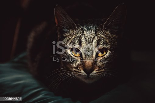 Russia, Abstract, Animal, Animal Body Part, Animal Eye