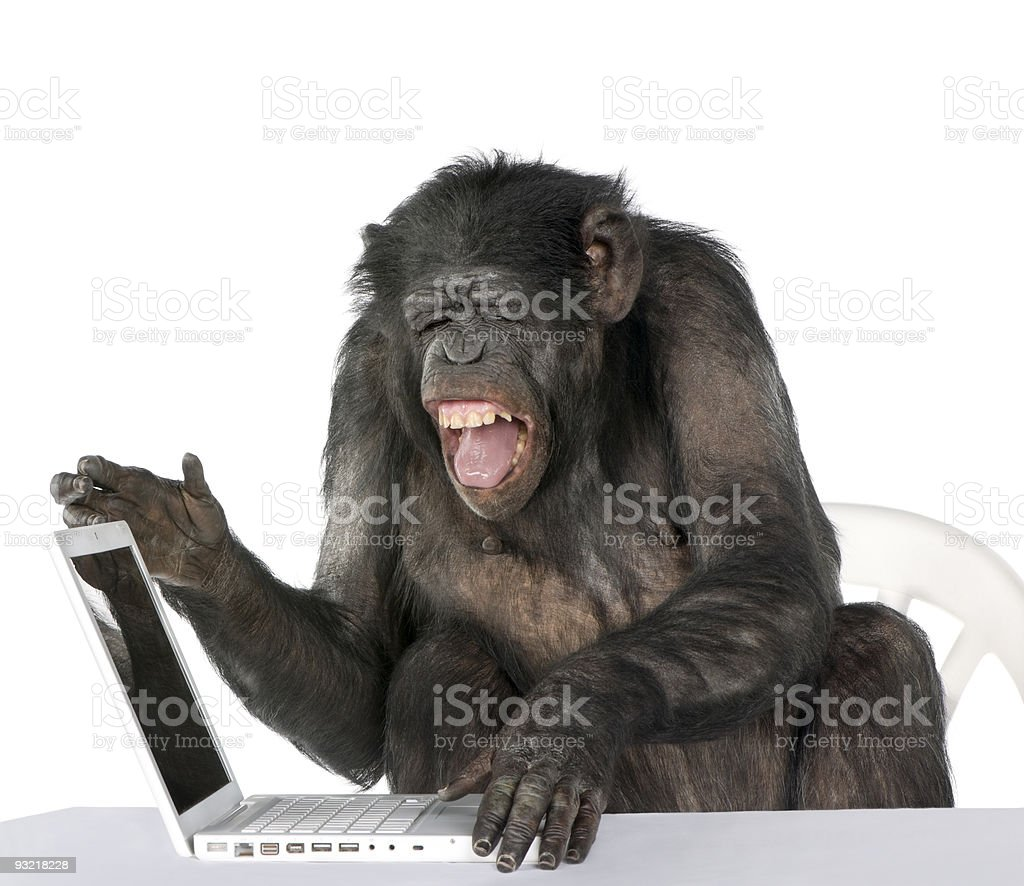 Portrait of Chimpanzee playing with a laptop against white background stock photo