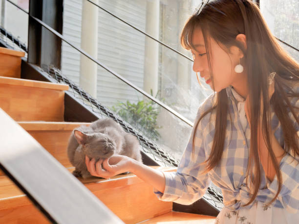 Portrait of Chinese young girl play with her cat at home in sunny afternoon, happy pets lifestyle. stock photo