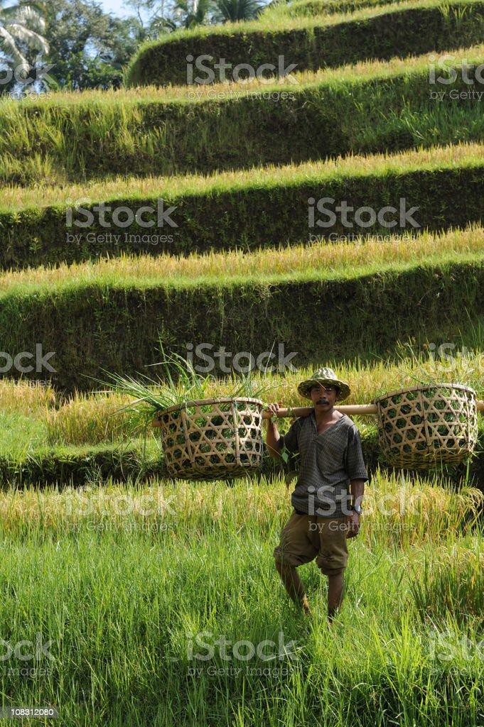 Portrait of  countryman stock photo