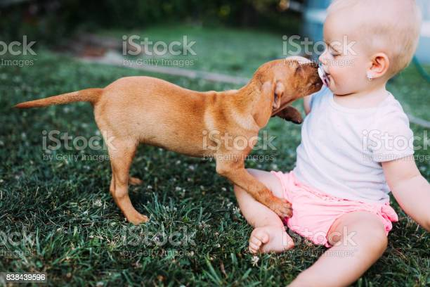 Portrait of cute baby playing with dog picture id838439596?b=1&k=6&m=838439596&s=612x612&h=0iknsvo0efglro j ddxiufarghti1oz45hz9wux8yo=