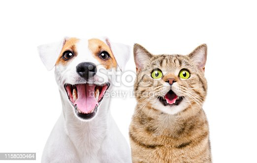 istock Portrait of cute dog Jack Russell Terrier and cheerful cat Scottish Straight isolated on white background 1158030464