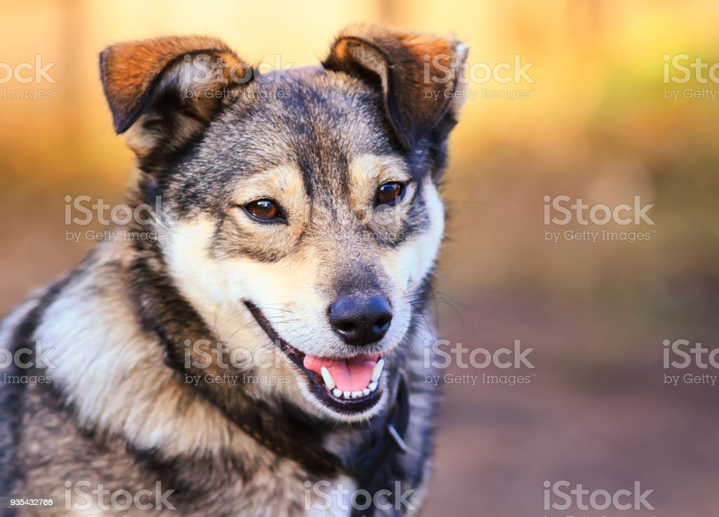 Portrait Of Cute Funny Dog Puppy Mutts Smiling Friendly Stock Photo Download Image Now Istock