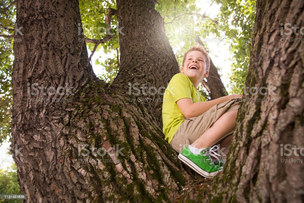Portrait of cute kid boy sitting on the big old tree on sunny day....