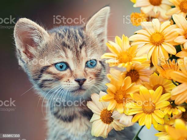Portrait of cute little kitten with flowers picture id533852333?b=1&k=6&m=533852333&s=612x612&h=oimprdtpkhuyulv y uwza8tis6iyn3g4lam1hyxiyg=