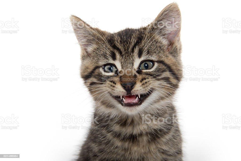 Portrait of cute tabby kitten stock photo