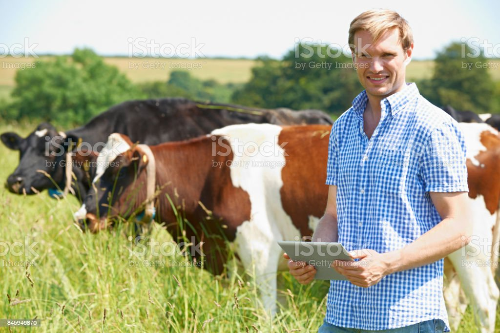 Portrait Of Dairy Farmer With Digital Tablet In Field stock photo