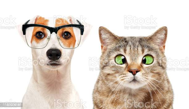 Portrait of dog and cat with eye diseases isolated on white picture id1132026181?b=1&k=6&m=1132026181&s=612x612&h=mw36tpa9f7suzzjebjwxcybzlwfdkoezfh vbktot08=