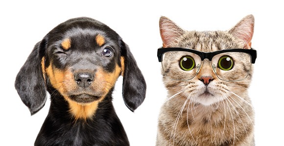 Portrait of dog and cat with eyes diseases isolated on a white background