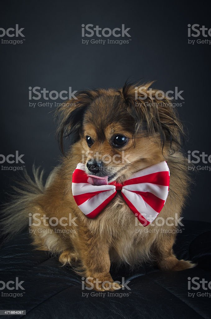 Portrait of Dog royalty-free stock photo
