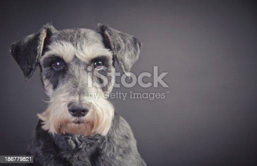 Beautiful little dog portrait