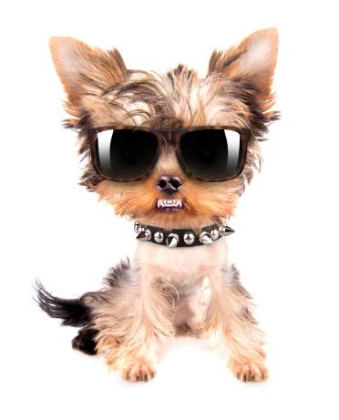 Ritratto Di Cane Con Puntale Collo E Occhiali - Fotografie stock e altre immagini di Alla moda