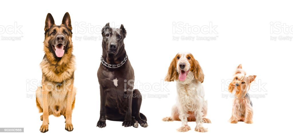 Portrait of dogs sitting together stock photo