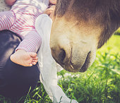 Portrait of donkey and a baby girl feet close up, Outdoors.