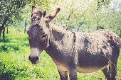 Portrait of donkey, Outdoors.