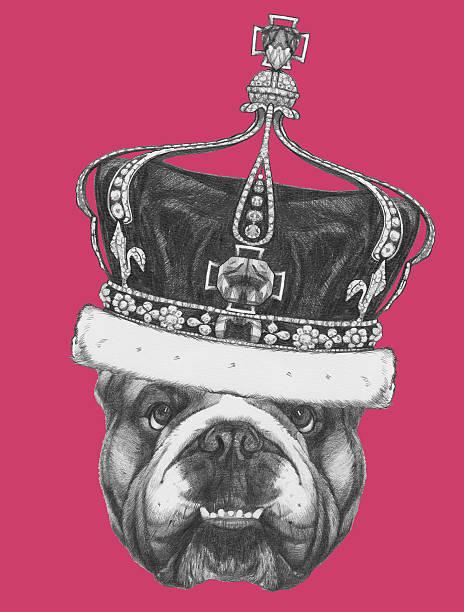 porträt der englische bulldogge mit krone. - königin kopfteil stock-fotos und bilder