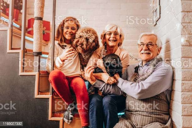 Portrait of excited family sitting on stairs with pets on christmas picture id1193027332?b=1&k=6&m=1193027332&s=612x612&h=fgusripy5 m0pyj2q 5e8ycwaxehk7fxr0i4p 88f0c=