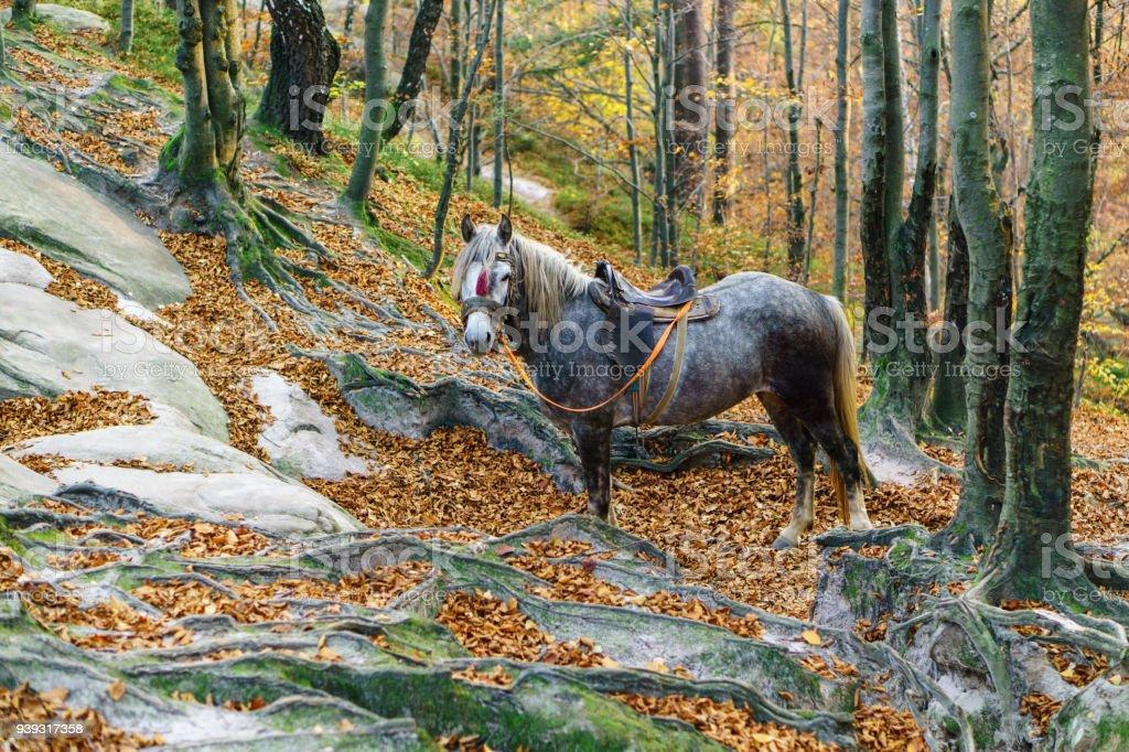 Portrait Of Fantasy Magic Fairy Tale Gray Horse Stock Photo Download Image Now Istock
