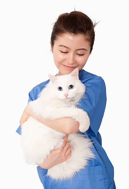 Portrait of female veterinarian holding a white cat stock photo