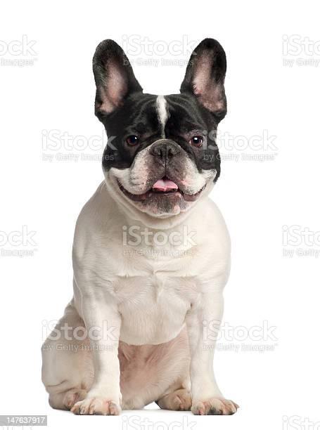 Portrait of french bulldog 2 years old sitting picture id147637917?b=1&k=6&m=147637917&s=612x612&h=1zoziv7v9 nqndgxva1zeziamytkskxzmgnild5hoig=