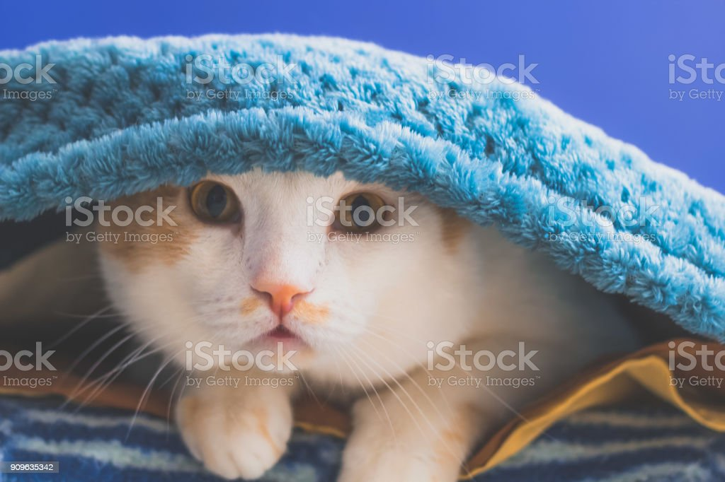 portrait of funny cat stock photo