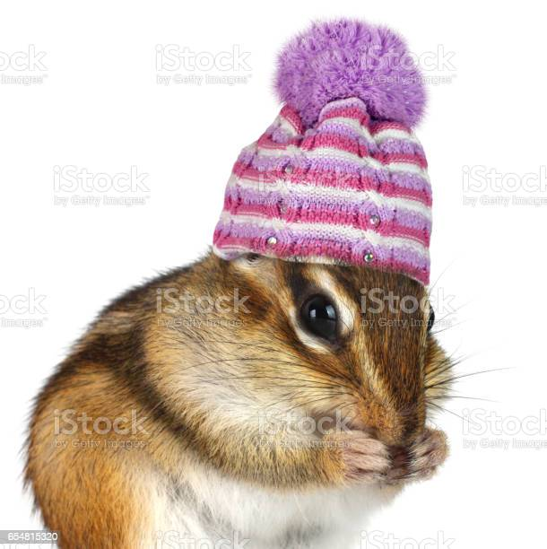 Photo of Portrait of funny chipmunk with hat on white, cold weather concept