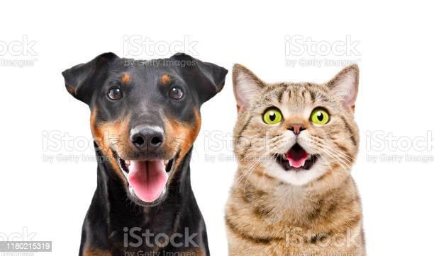 Portrait of funny dog breed jagdterrier and cheerful cat scottish picture id1180215319?b=1&k=6&m=1180215319&s=612x612&h=q f ytk2hsx29zbxlhvkgwaxj58pxw8sca8cxqdefa8=