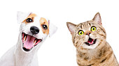 istock Portrait of  funny dog Jack Russell Terrier and cheerful cat Scottish Straight isolated on white backgroun 1215945146