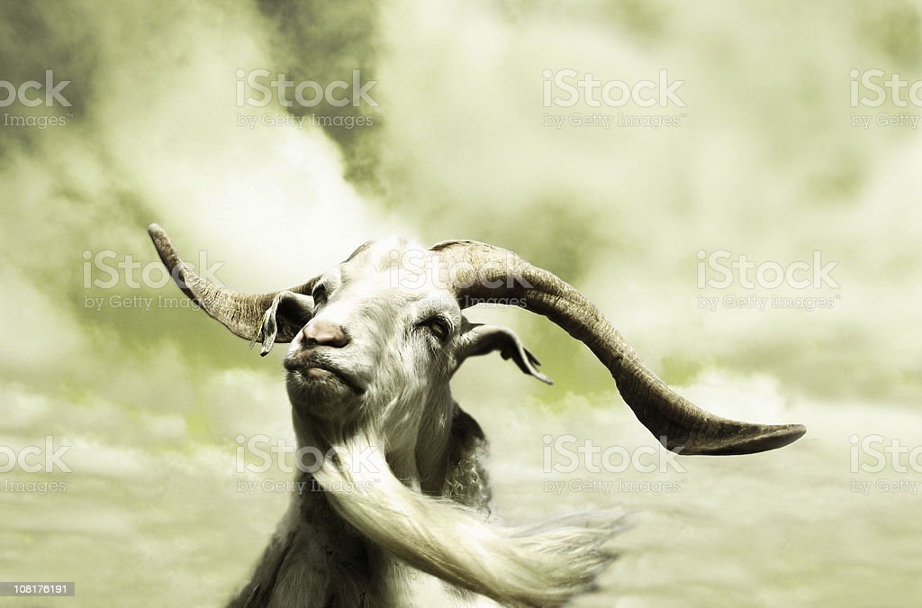 Portrait of Goat with Long Beard, Toned royalty-free stock photo