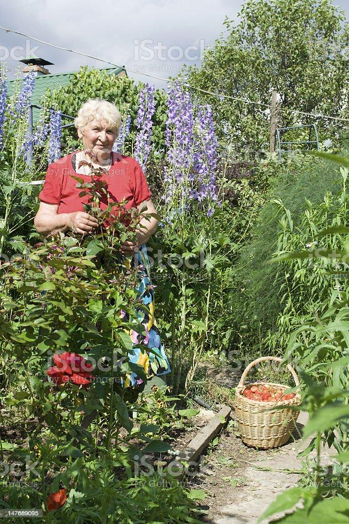 Portrait of grandma in the garden royalty-free stock photo