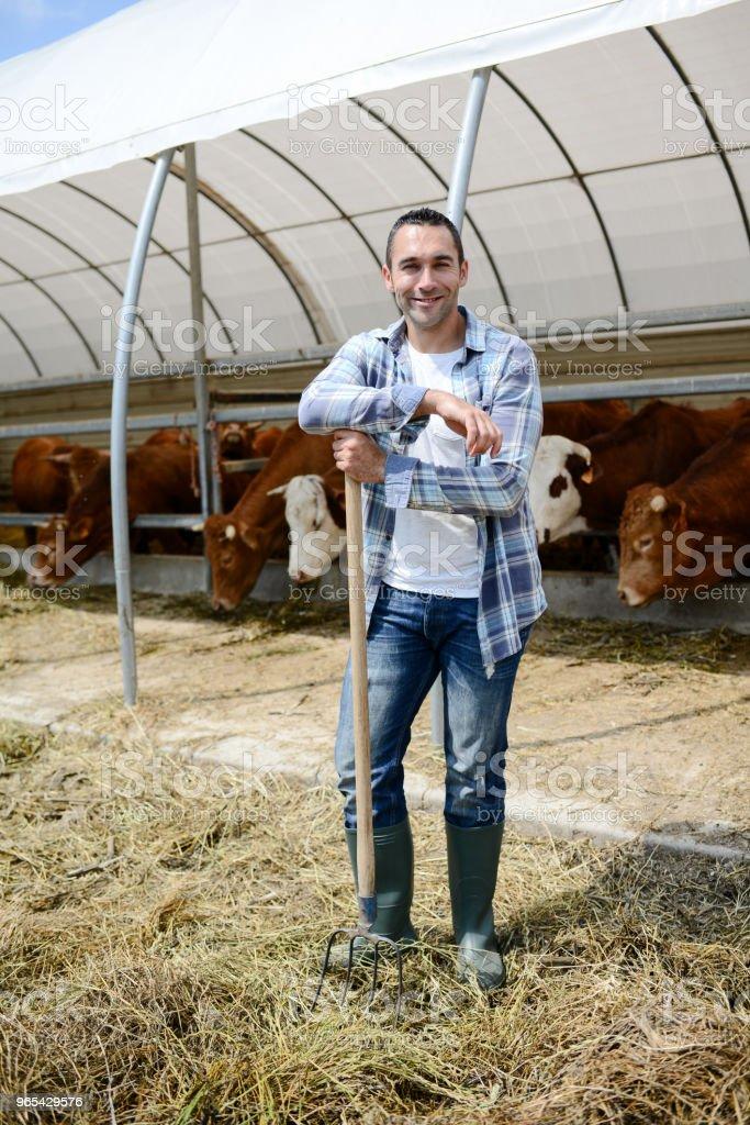 Portrait d'agriculteur beau dans un élevage de petit élevage en prenant soin de bovins et de vache charolais de production agricole - Photo de 25-29 ans libre de droits