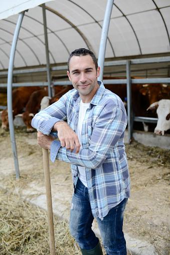 Portrait Of Handsome Farmer In A Livestock Small Breeding Husbandry Farming Production Taking Care Of Charolais Cow And Cattle - zdjęcia stockowe i więcej obrazów 25-29 lat
