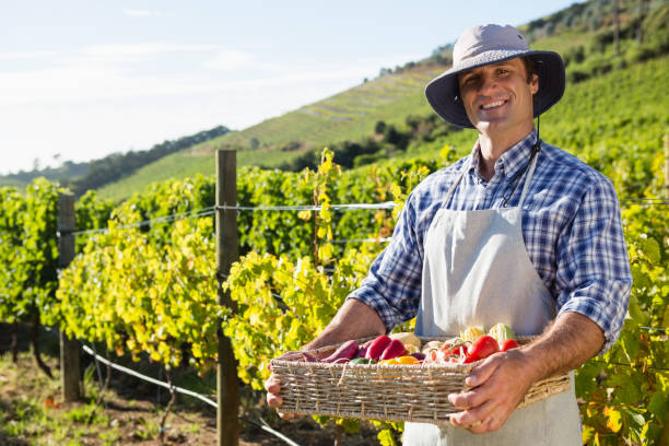 portrait of happy man holding a basket of fresh vegetables - organic farm stock photos and pictures
