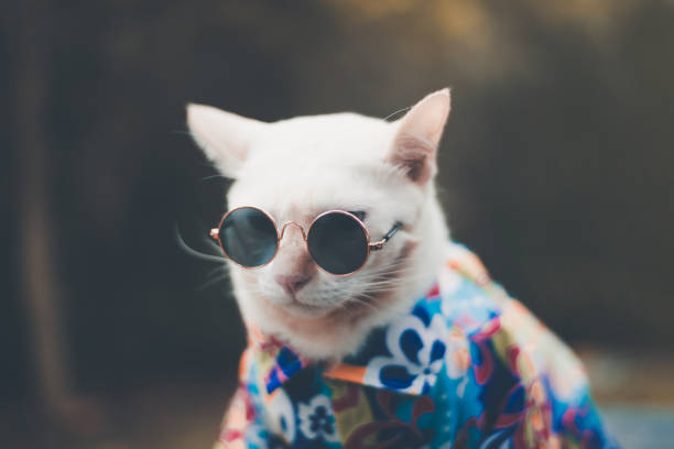 Portrait of hipster white cat wearing sunglasses and shirtanimal picture id1071075910?b=1&k=6&m=1071075910&s=612x612&w=0&h=k1a1turtdsefrcebuhvcgtclklkixdva7hyajqemtxk=