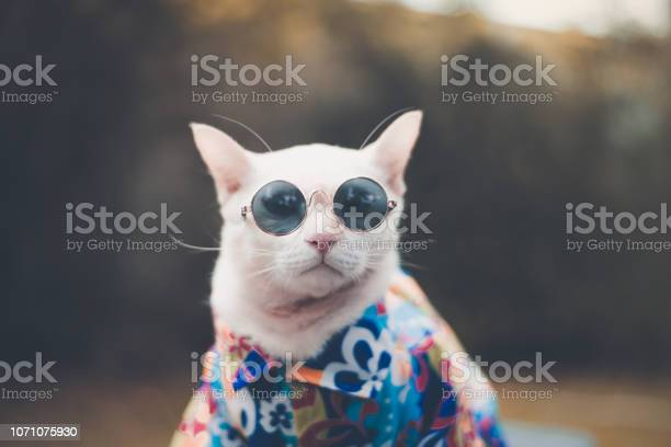 Portrait of hipster white cat wearing sunglasses and shirtanimal picture id1071075930?b=1&k=6&m=1071075930&s=612x612&h=pasien fqxzk98ayop0oxcxdj9ma7zko2v o8szfgqm=