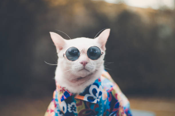 portrait of hipster white cat wearing sunglasses  and shirt,animal  fashion concept. - summer background стоковые фото и изображения