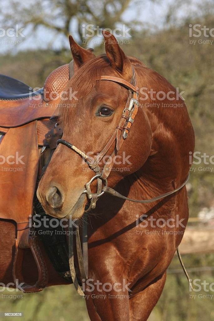 Portrait of horse royalty-free stock photo