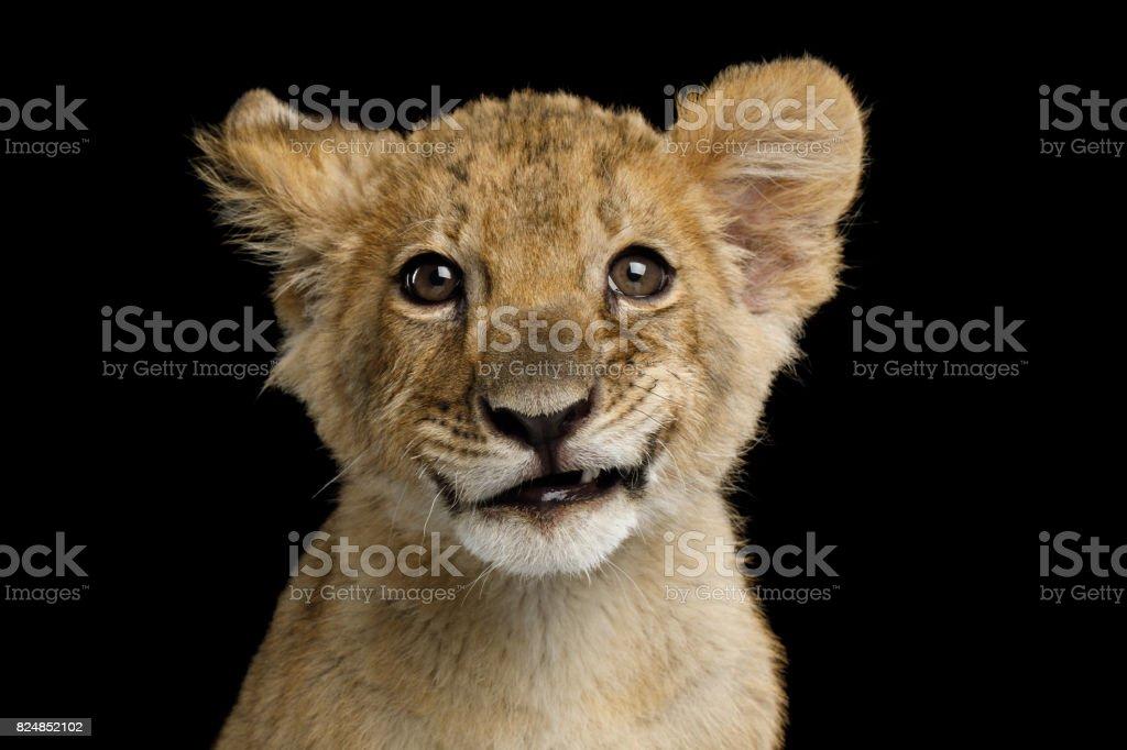 Retrato de um filhote de leão foto royalty-free
