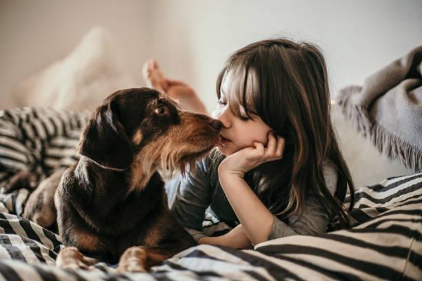 Retrato de niña y su perro en la cama - foto de stock